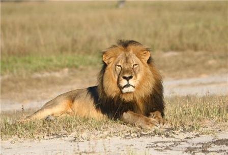 Ο κυνηγός του λιονταριού της Ζιμπάμπουε έγινε ο ίδιος «θήραμα»