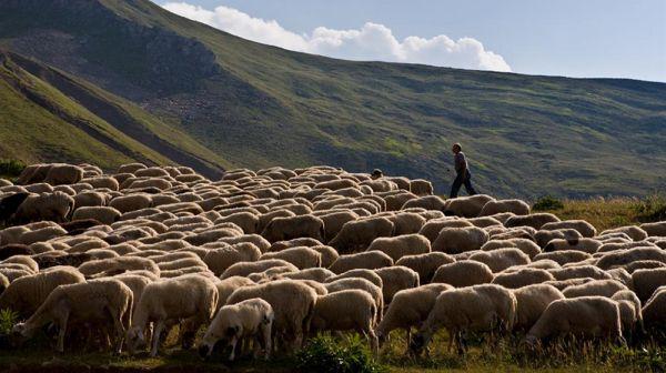 Φωνή απόγνωσης των κτηνοτρόφων της Θεσσαλίας