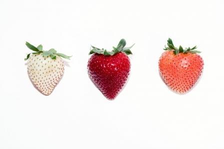 Πώς μια εταιρεία αποφάσισε να δημιουργήσει τη «φράουλα του μέλλοντος»