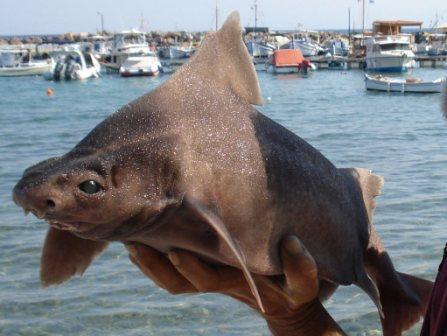Σπάνιο ψάρι στο βυθό της θάλασσας