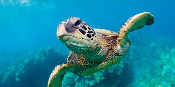 Εντοπίστηκε νεκρή θαλάσσια χελώνα