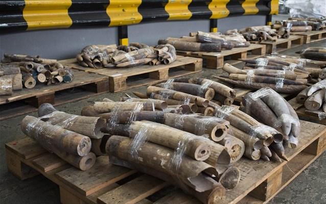 Κατάσχεση 700 κιλών κεράτων ρινόκερου και ελεφαντόδοντου στο Βιετνάμ