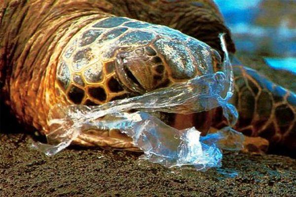 Τι προκαλούν τα πλαστικά σκουπίδια που πετάμε στις παραλίες (βίντεο)