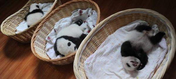 10 μικρά πάντα σε καλάθια, κάνουν σαν... μωρά (εικόνες)