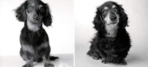 Και οι σκύλοι γερνάνε - Ένα απίθανο πρότζεκτ (εικόνες)