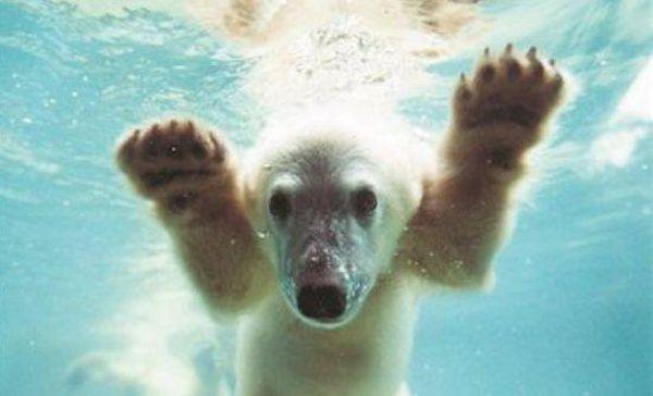 Από αυτοάνοσο νόσημα πέθανε το διάσημο αρκουδάκι Κνουτ