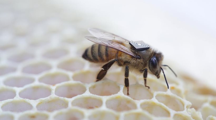 Online κυψέλες και ηλεκτρονικές ετικέτες για την προστασία των μελισσών
