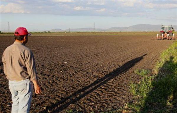 Η ακτινογραφία της ελληνικής γεωργίας από την Τράπεζα Πειραιώς