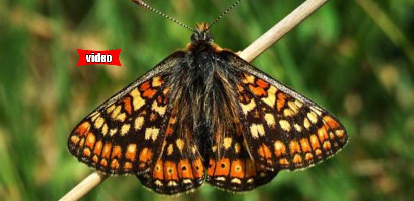 Η εκπληκτική μεταμόρφωση μιας πεταλούδας σε ένα βίντεο!