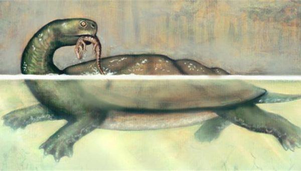 Ανακαλύφθηκε στην Κολομβία η αρχαιότερη θαλάσσια χελώνα ηλικίας 120 εκατ. ετών