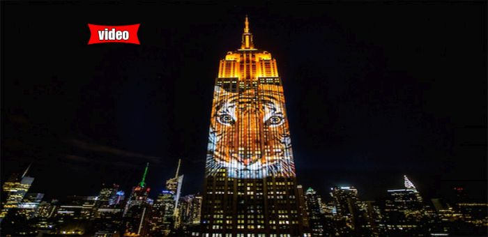 """Είδη προς εξαφάνιση """"σκαρφάλωσαν"""" στο Empire State Building -Ενας Ελληνας πίσω από την ιδέα"""