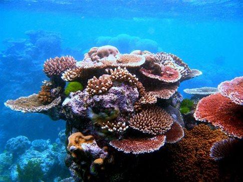 Θερμές θάλασσες φέρνουν παγκόσμια επιδημία στα κοράλλια