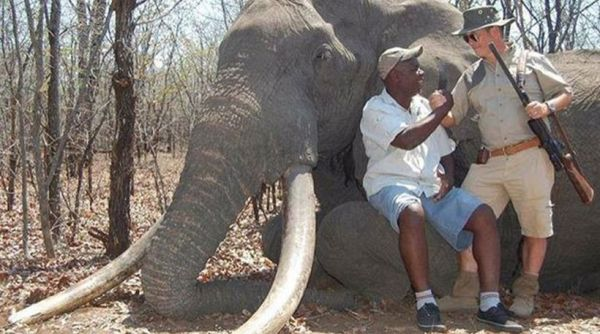 Νέα «υπόθεση Σεσίλ»: Γερμανός κυνηγός σκότωσε τον γηραιότερο ελέφαντα στην Αφρική