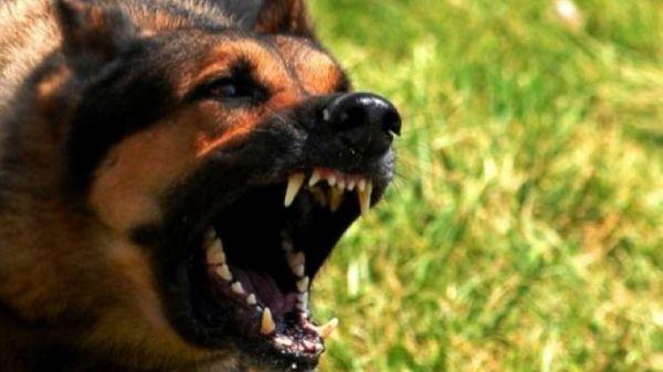 Επίθεση από αγέλη 20 σκυλιών δέχθηκε νεαρή κοπέλα