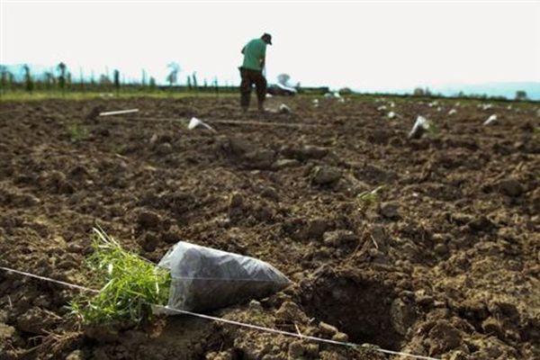 Έως 5.000 ευρώ εισόδημα δηλώνουν οι αγρότες