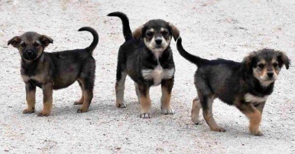Στείρωσε το ζώο σου: Πανελλαδική καμπάνια για το πρόβλημα των αδέσποτων (βίντεο)