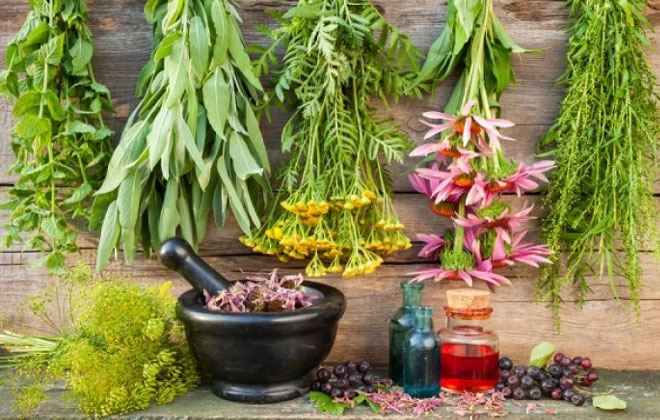 Tα θαυματουργά βότανα που βοηθούν την αναπνοή και καθαρίζουν τα πνευμόνια