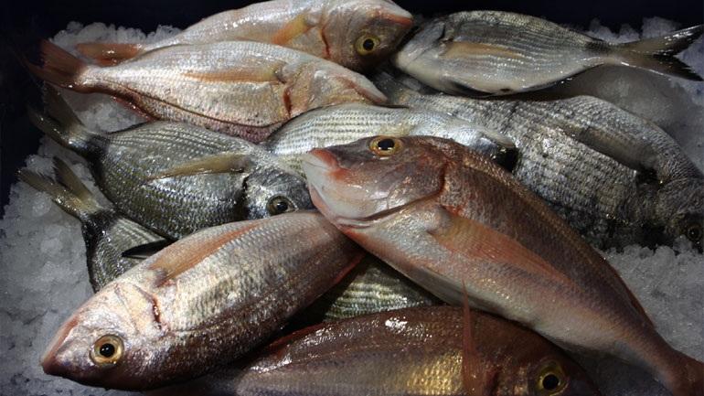 Φεστιβάλ ελληνικού ψαριού στη Νέα Υόρκη