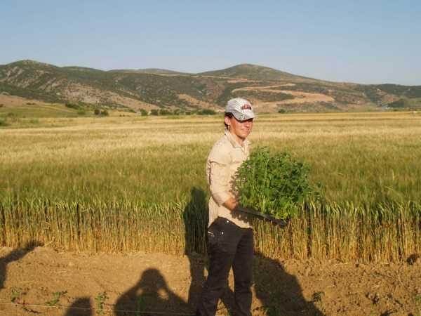 Τράπεζα Πειραιώς: Επέκταση συνεργασιών Συμβολαιακής Γεωργίας & Κτηνοτροφίας