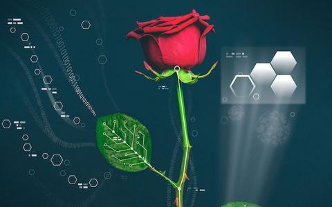 Ηλεκτρονικά τριαντάφυλλα δίνουν άλλη διάσταση στα... ενεργειακά φυτά