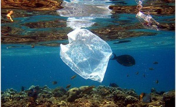 Τα βιοδιασπώμενα πλαστικά σπάνια διαλύονται στον ωκεανό