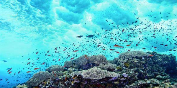 Απαντήσεις για την κλιματική αλλαγή στη θάλασσα