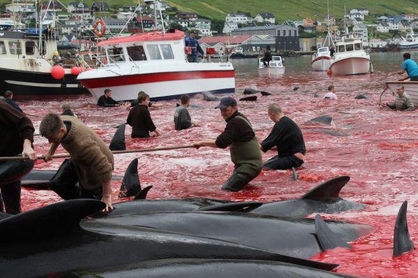 Ιαπωνία: Ξεκινά ξανά η θηριωδία με το κυνήγι των φαλαινών (εικόνες)