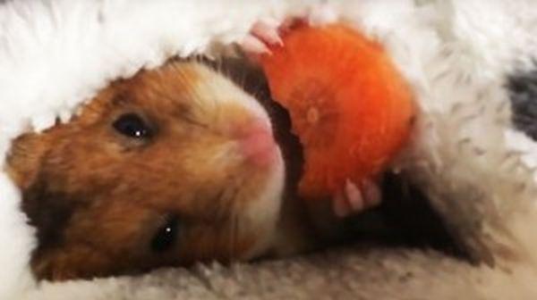 Ο Mike τρώει το καρότο του πριν κοιμηθεί...