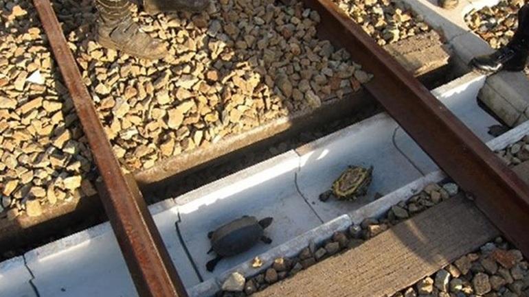 Φτιάχνουν σήραγγες για χελώνες στην Ιαπωνία