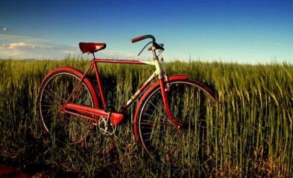 Οι κάτοχοι ποδήλατου έμειναν σχεδόν οι μισοί την τελευταία 30ετία
