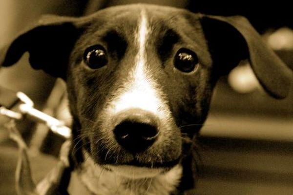 Δώδεκα μήνες φυλάκιση για κακοποίηση ζώων