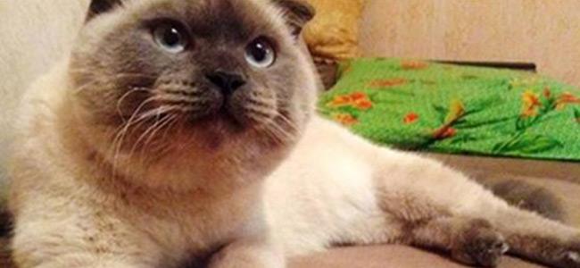 Πόλη της Σιβηρίας θέλει για δήμαρχό της έναν γάτο