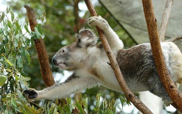 Η Αυστραλία τοπ προορισμός για το 2016