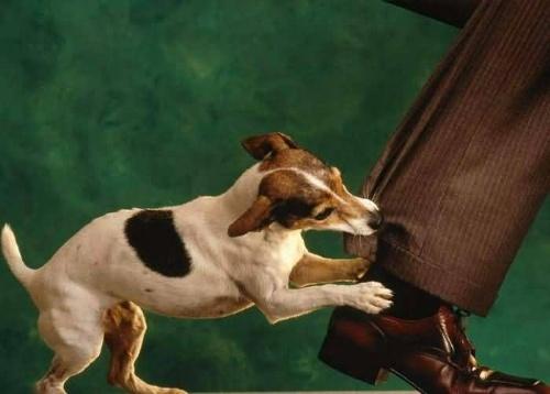 Αποτέλεσμα εικόνας για δαγκωμα σκυλου