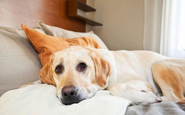 Ξενοδοχείο θεωρεί τους σκύλους πιο ευπρόσδεκτους από τους ανθρώπους