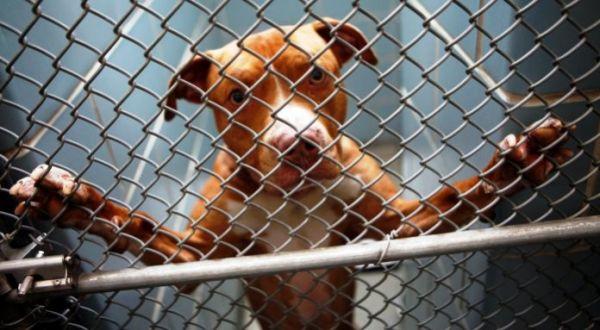 FBI: επαναστατική βάση δεδομένων συνδέει την κακοποίηση ζώων με άλλα εγκλήματα
