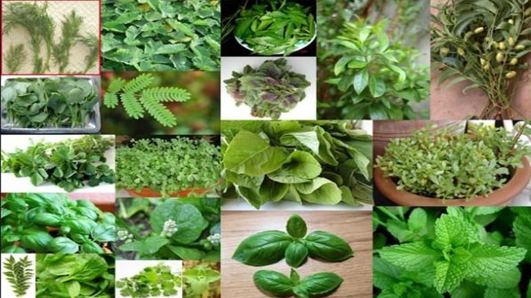 Οκτώ βότανα και φυτά που κάνουν θαύματα στην υγεία