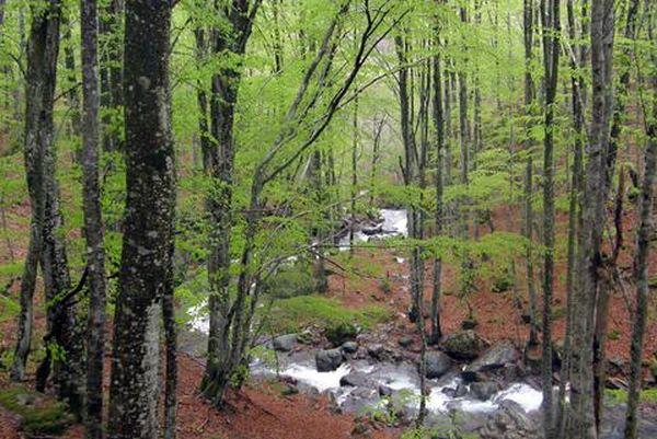 Τα δάση κωνοφόρων θερμαίνουν την ατμόσφαιρα αντί να δροσίζουν