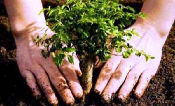 Η ακατάλληλη αναδάσωση επιδεινώνει την κλιματική αλλαγή