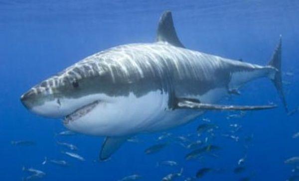 Νέο ρεκόρ επιθέσεων από καρχαρίες για το 2015