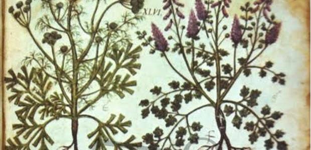 Αφιέρωμα στα βότανα