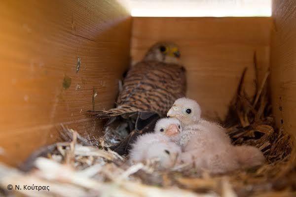 Πρωτοβουλία προστασίας σπάνιων πουλιών