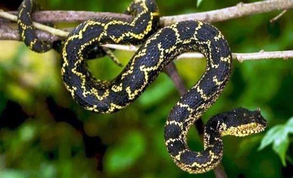 Aπίστευτο, υπάρχουν ιπτάμενα φίδια