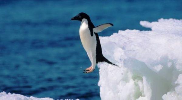 Μυστήριο με 150.000 πιγκουίνους που «εξαφανίστηκαν»