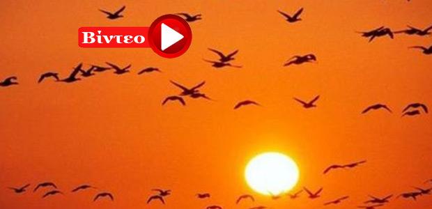 Εναέρια «χορογραφία» από πουλιά