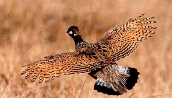 Αναζητείται πτηνό που έχει εξαφανιστεί από τη χώρα μας εδώ και 150 χρόνια