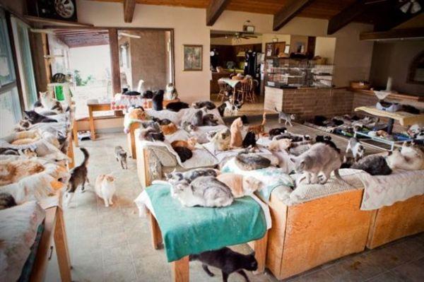 Γαλλίδα που ζούσε με 113 γάτες κατηγορείται για κακοποίηση ζώων