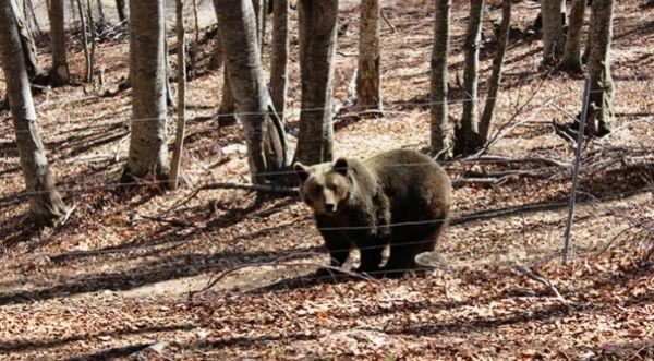 Αρκτούρος: ξύπνησαν οι αρκούδες στο Νυμφαίο