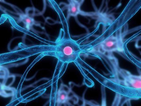 Τεχνική καταγράφει σε πραγματικό χρόνο τη γέννηση νέων εγκεφαλικών κυττάρων