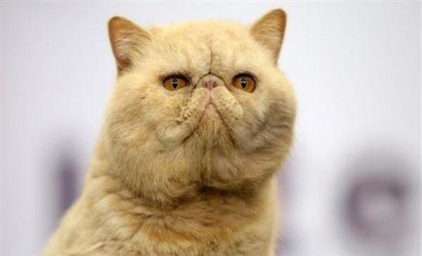 Καναδάς: Νέα εκστρατεία κατ' οίκον περιορισμού γατών για τη διάσωση πτηνών